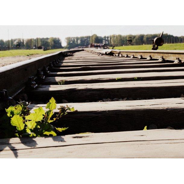 Temarejse til Auschwitz 17. - 23. oktober 2021